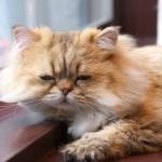 猫診断・何がわかるの?あなたは何猫?